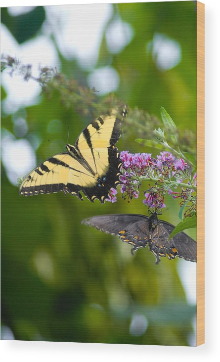 Butterfly Wood Print featuring the photograph Untitled by Mandy Willis