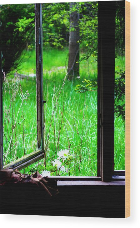 Broken Window Wood Print featuring the photograph Want To Get Free Too by Rachel Porostosky