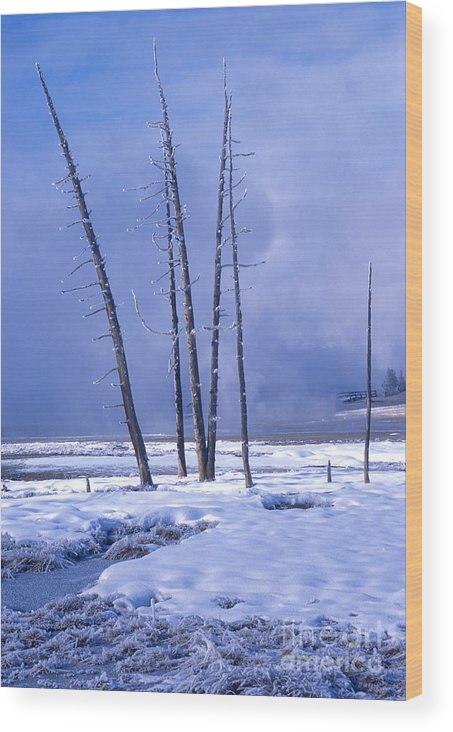 Landscape Wood Print featuring the photograph Winter by Sandra Bronstein