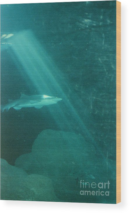 Sharks Wood Print featuring the photograph Close Encounters by Jeffery L Bowers