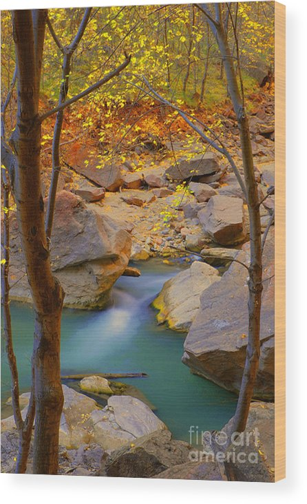 Utah Wood Print featuring the photograph Virgin River In Autumn by Dennis Hammer