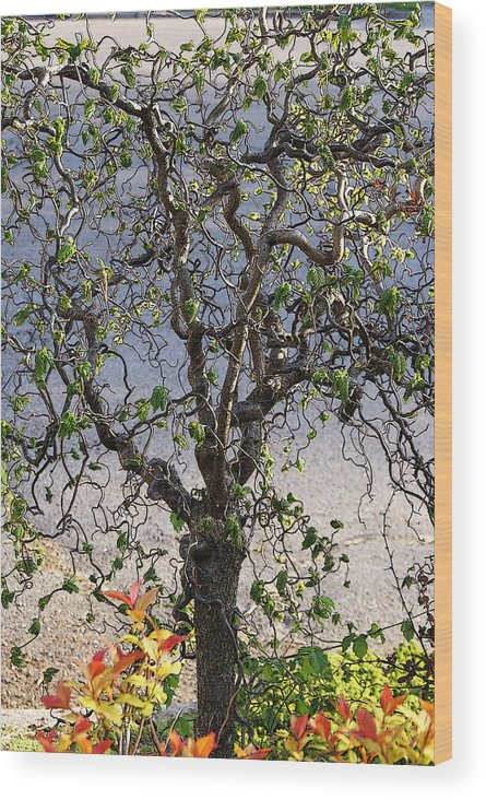 Tree Wood Print featuring the photograph Artistic Tree by Margie Avellino