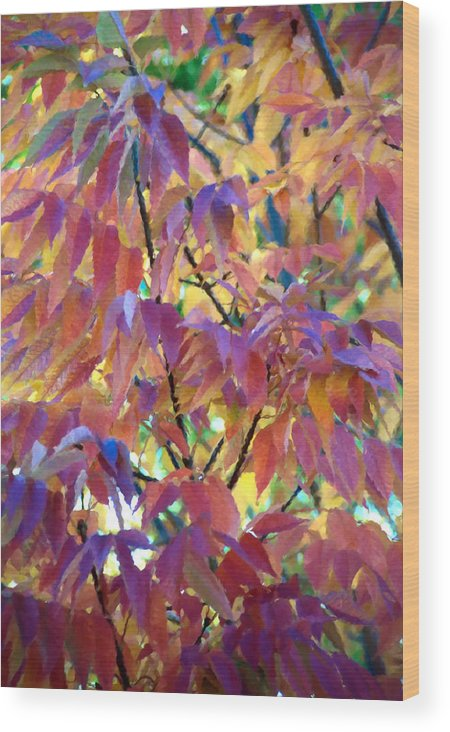 Ash Tree Wood Print featuring the photograph Autumn Ash Tree 1 by Steve Ohlsen
