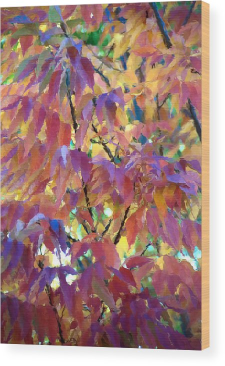 Ash Tree Wood Print featuring the photograph Autumn Ash Tree 3 by Steve Ohlsen
