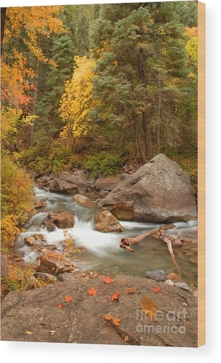 Autumn Wood Print featuring the photograph Autumn In Alpine Loop by Dennis Hammer