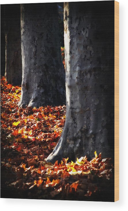 Tree Wood Print featuring the photograph Autumn In The Park by Cabral Stock