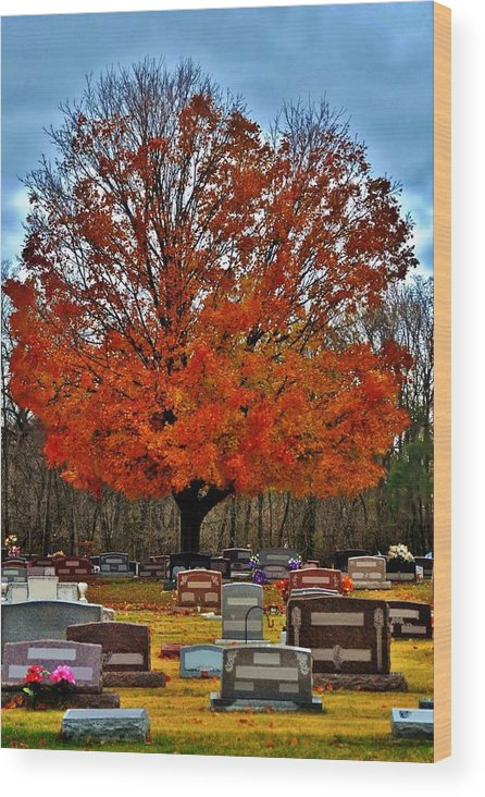 Autumn Wood Print featuring the photograph Autumn Somnolence by Michelle McPhillips