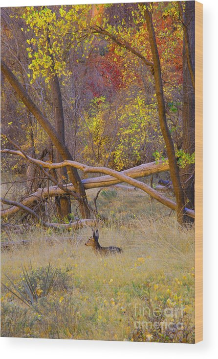 Deer Wood Print featuring the photograph Autumn Yearling by Dennis Hammer