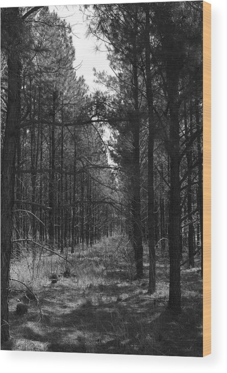 Nature Wood Print featuring the photograph Black Forrest by Rich Caperton