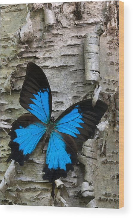 Butterfly Wood Print featuring the photograph Butterfly by Andreas Freund