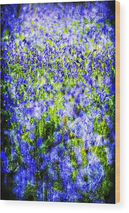 Flowers Wood Print featuring the photograph Carpet Of Blue by Meirion Matthias