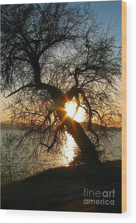 Tree Wood Print featuring the photograph Character by Idaho Scenic Images Linda Lantzy