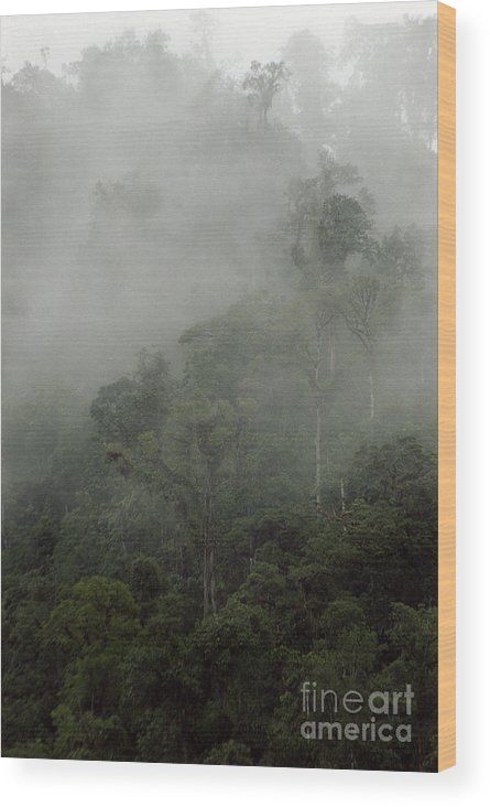 Rainforest Wood Print featuring the photograph Cloud Forest by Kathy McClure