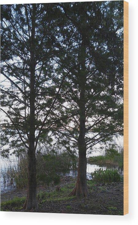 Cypress Trees Wood Print featuring the photograph Cypress Trees by John Hiatt