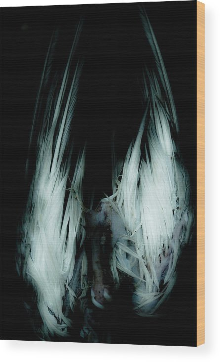 Bird Wood Print featuring the photograph Dead Bird Grey by Grebo Gray