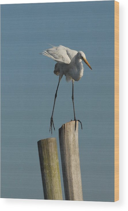 Great Egret Wood Print featuring the photograph Egret 48 by Joyce StJames