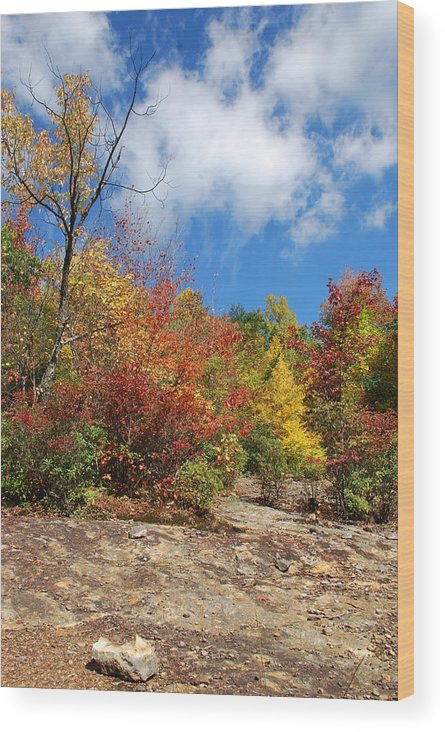Mountains Wood Print featuring the photograph Fall Colors by Patsy Phillips