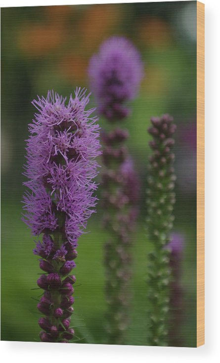 Nature Wood Print featuring the photograph Flowers 4 by Eric Workman