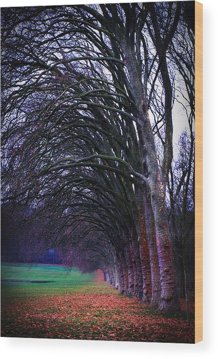 Tree Wood Print featuring the photograph Follow The Leader by Cabral Stock