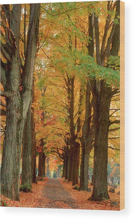 Fall Wood Print featuring the photograph Golden Avenue by Raju Alagawadi