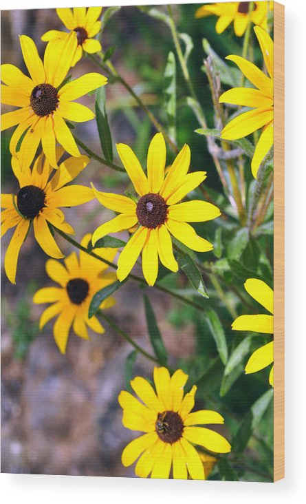 Nature Photography Wood Print featuring the photograph Golden by Elizabeth Del Rosario-Baker