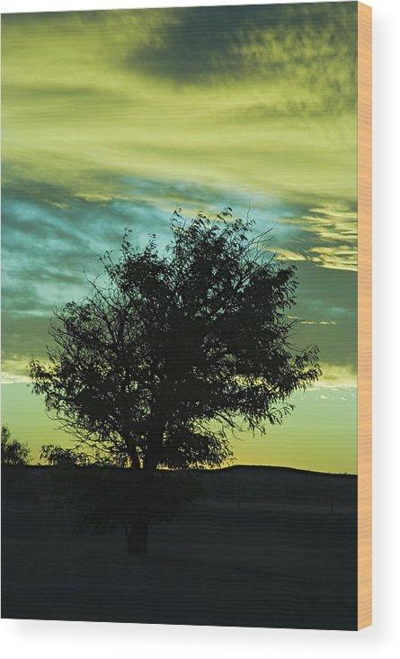 Sunset Wood Print featuring the photograph Green Sunset by Terry Wieckert