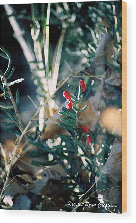 Red Wood Print featuring the photograph Hint Of Red by Laura Roberson Chavez