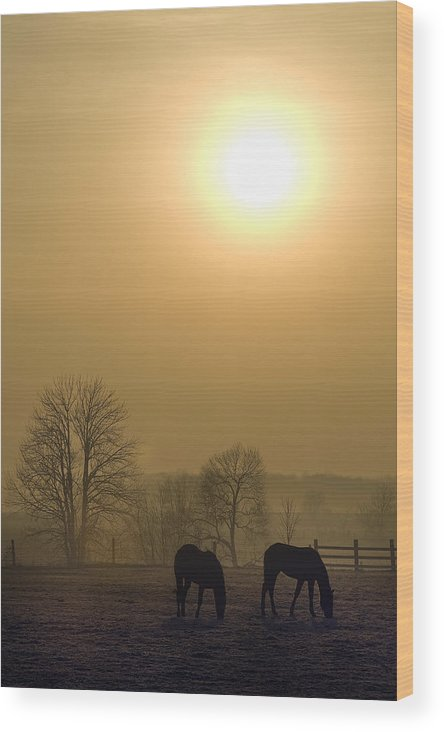 Landscape Wood Print featuring the photograph Horses At Sunrise-2 by Steve Somerville