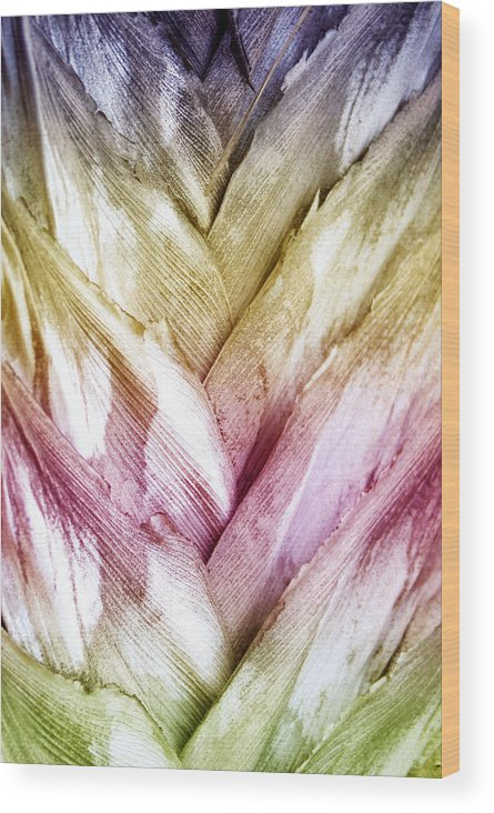 Nature Wood Print featuring the photograph Interwoven Hues by Holly Kempe