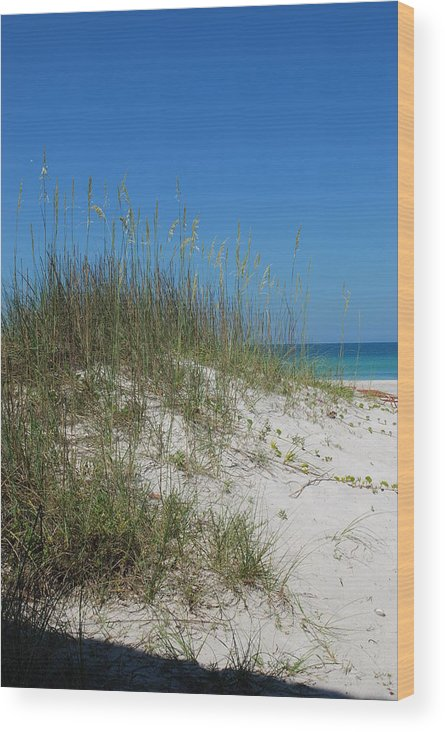 Beach Wood Print featuring the photograph Island Sea Oats by Lisa Gabrius