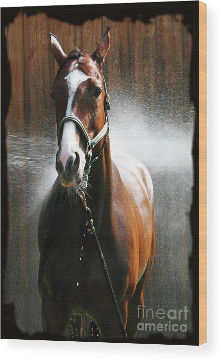 Deborah Johnson Wood Print featuring the photograph Ivys Shower by Deborah Johnson