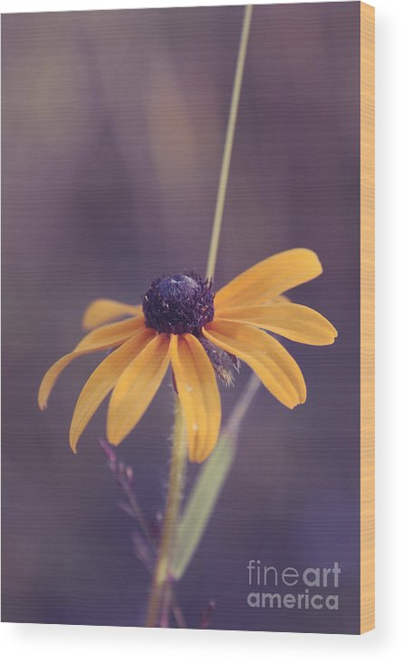 Flower Wood Print featuring the photograph La Bella by Aimelle