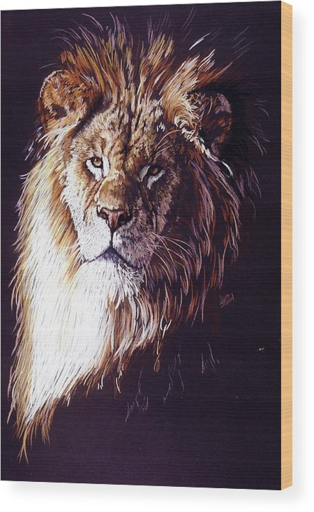 Lion Wood Print featuring the drawing Maestro by Barbara Keith