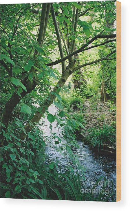 Photography Wood Print featuring the photograph Monet's Garden Stream by Nadine Rippelmeyer