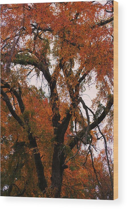 Tree Wood Print featuring the photograph Old Timer by Trudi Southerland