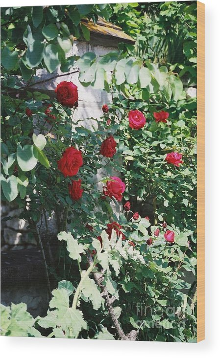 Floral Wood Print featuring the photograph Provence Red Roses by Nadine Rippelmeyer