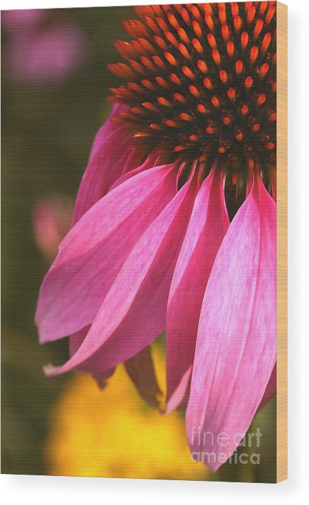 Coneflower Wood Print featuring the photograph Purple Coneflower Close-up by Steve Augustin