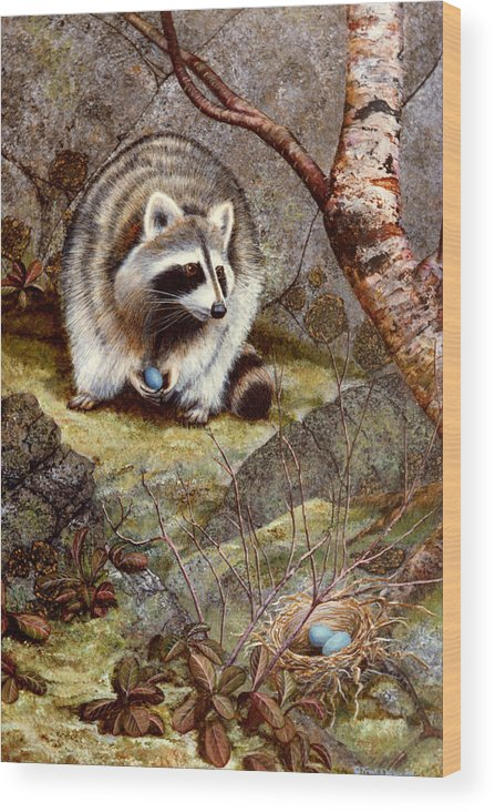 Raccoon Found Treasure Wood Print featuring the painting Raccoon Found Treasure by Frank Wilson