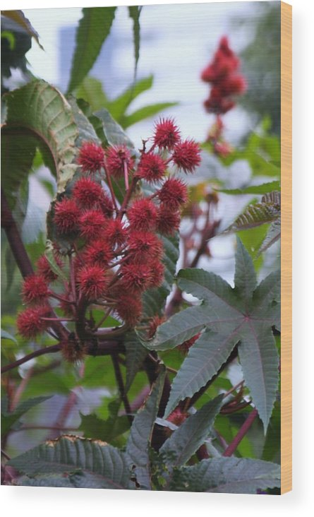 Flowers Wood Print featuring the photograph Red Spikes by Kenna Westerman