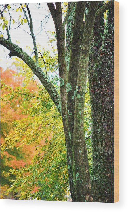 Trees Wood Print featuring the photograph Seasons by Trudi Southerland