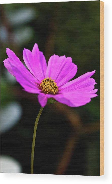 Sky Wood Print featuring the photograph Sky Facing Flower by Douglas Barnett