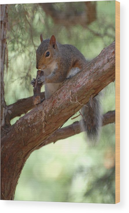 Squirrel Photographs Wood Print featuring the photograph Squirrel 2 by Joyce StJames