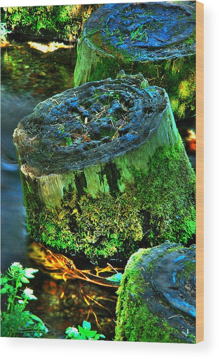 Stump Wood Print featuring the photograph Stumped by Tom Melo