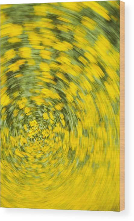 Flower Wood Print featuring the photograph Swirling Flowers by Bob Coates