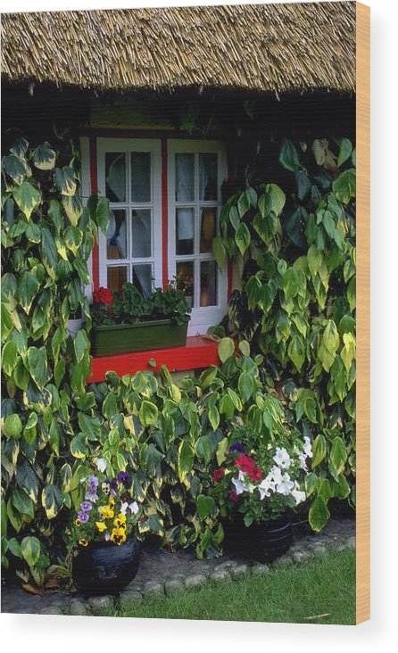 Ivy Wood Print featuring the photograph The Perfect Cottage by Carl Purcell