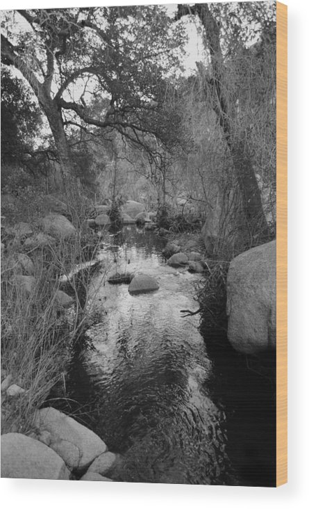 Stream Wood Print featuring the photograph The Stream by Bransen Devey