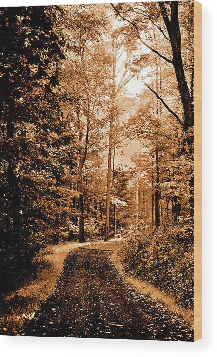 Landscape Wood Print featuring the photograph Waiting For Spring by Lori Tambakis
