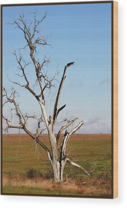 Tree Wood Print featuring the photograph Weathered by Jim Darnall