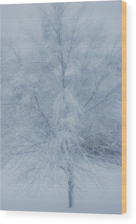 Tree Wood Print featuring the photograph White Tree by Peter McIntosh