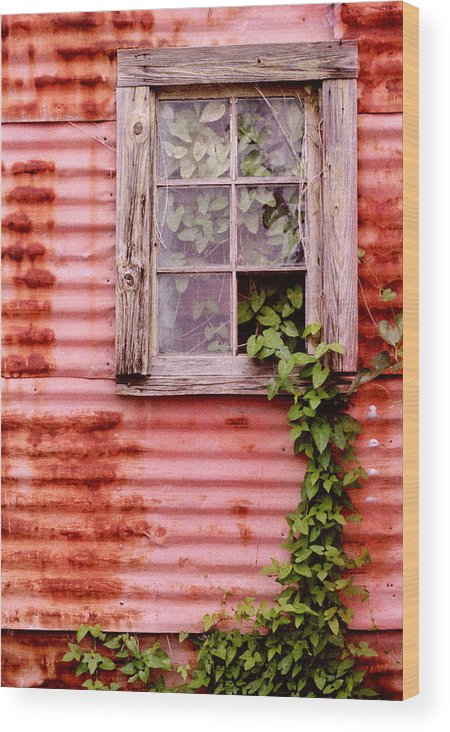 Window Wood Print featuring the photograph Window Of Ivy by Andrew Giovinazzo